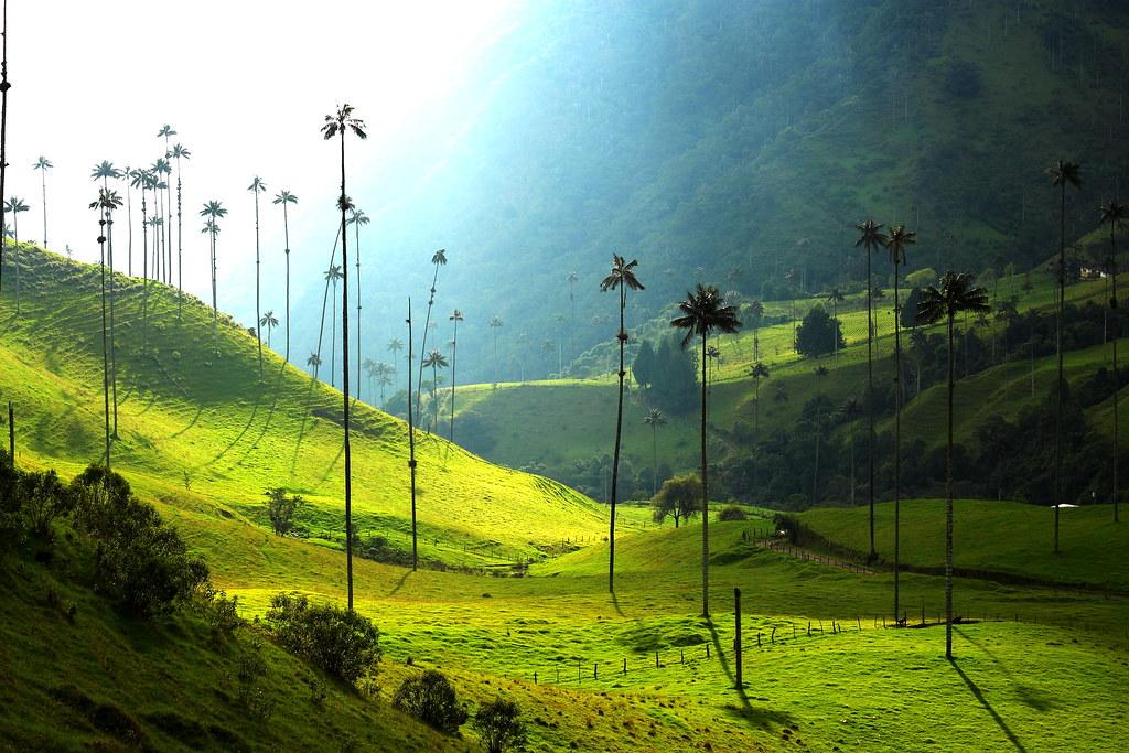 Imagen del Valle de Cocora y sus Hermosas Palmas de Cera - Los 10 mejores lugares turísticos del Quindio