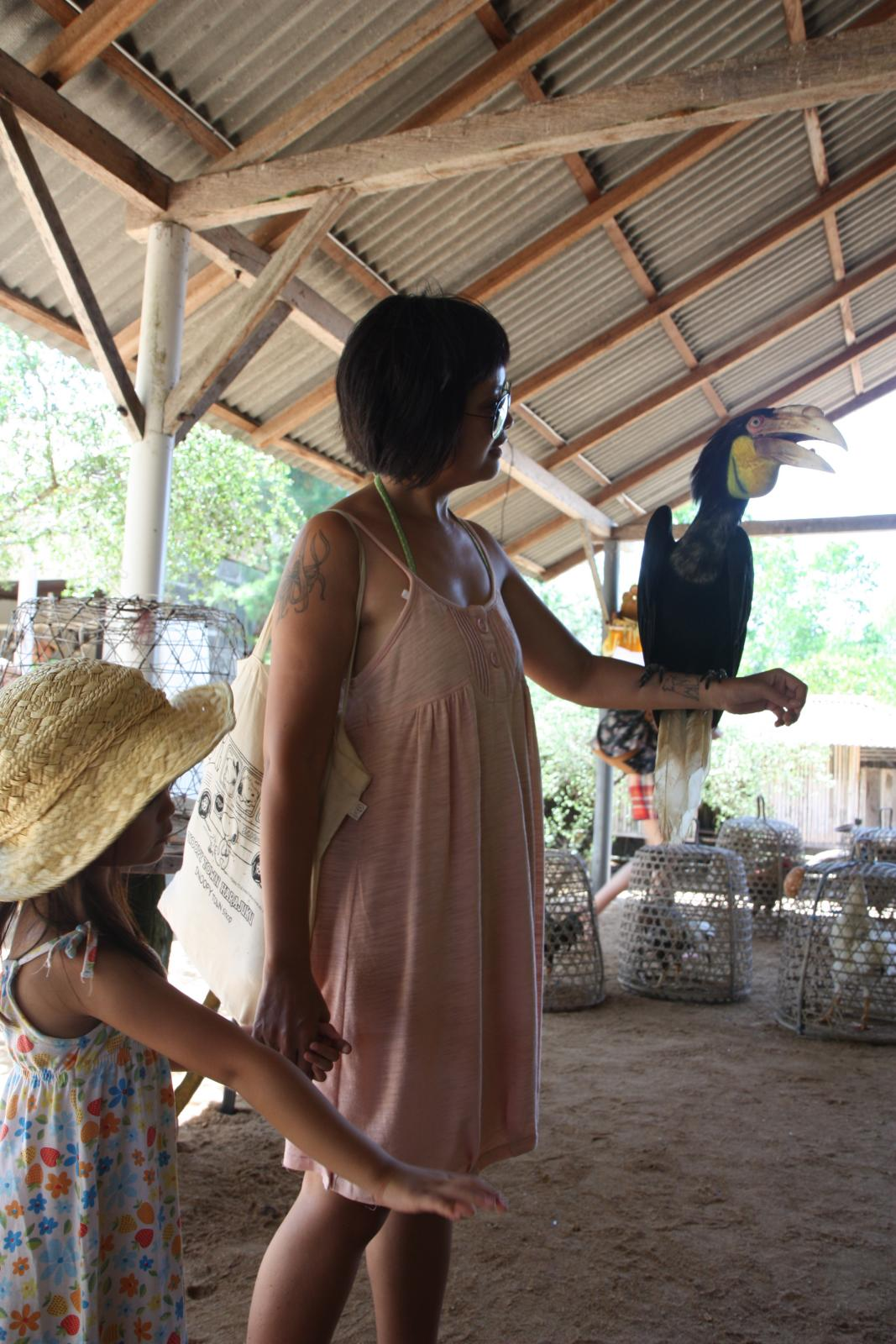 holding a wreathed hornbill