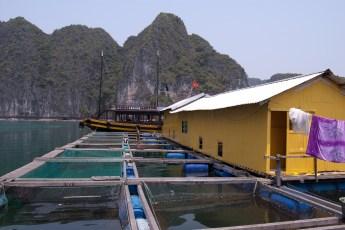 Besuch Pangasius Fischzucht 8