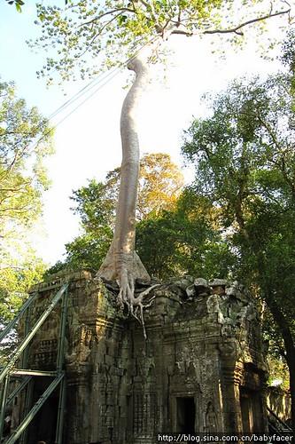 BKK_Angkor 693