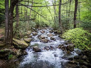 Saluda River at Jones Gap