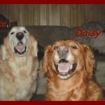Duke and Daisy