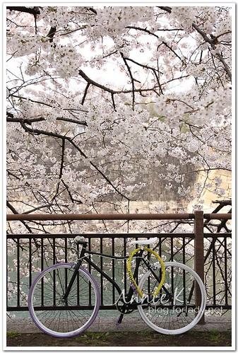 大阪城公園腳踏車