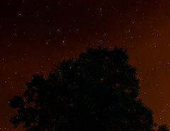 fireflies and starry skies