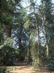 Kew Gardens (67)