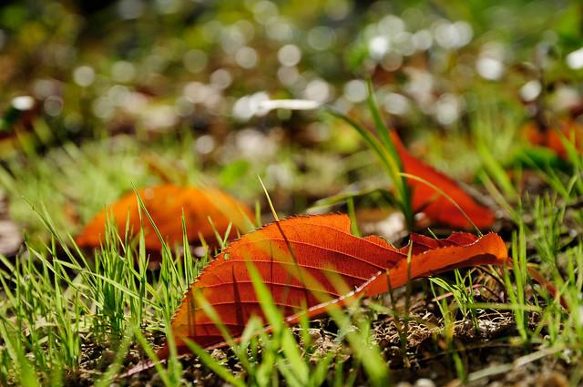 20101127 Nagoya 3 (Fallen leaf)