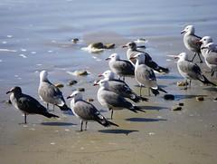 Dull Gull Meeting by Jim