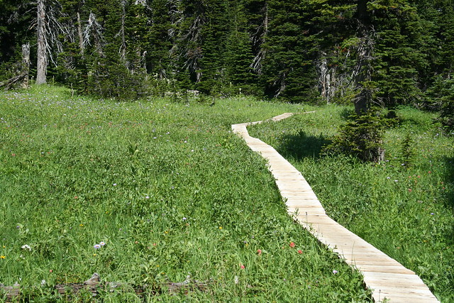 Board walk through the grass