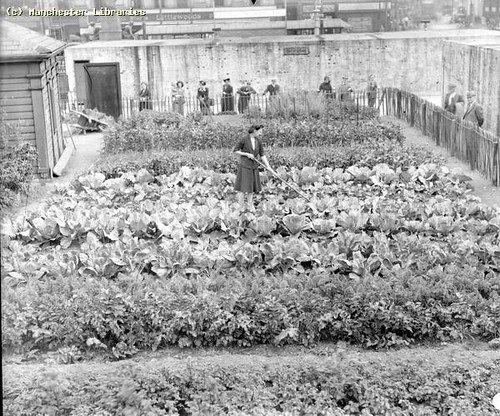 Allotment Piccadilly Gardens 1942