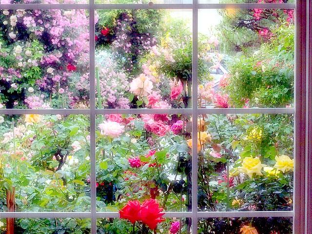Rose Garden:玫瑰园