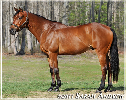 Wizard- conformation photo April 2011