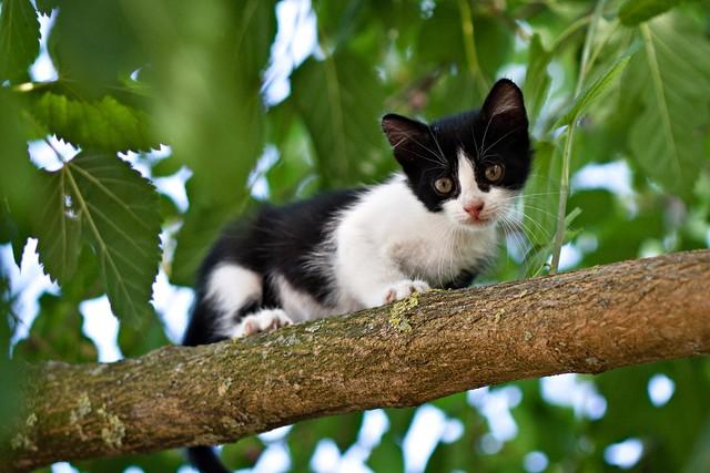 First tree climbing #01