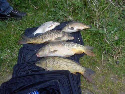 A nice catch of fish by La belle dame sans souci