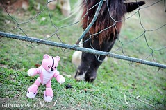Pink Bearguy at Baluarte