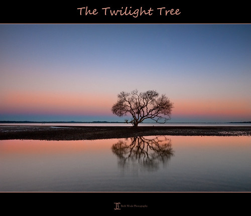 The Twilight Tree - explored 05/07/2011