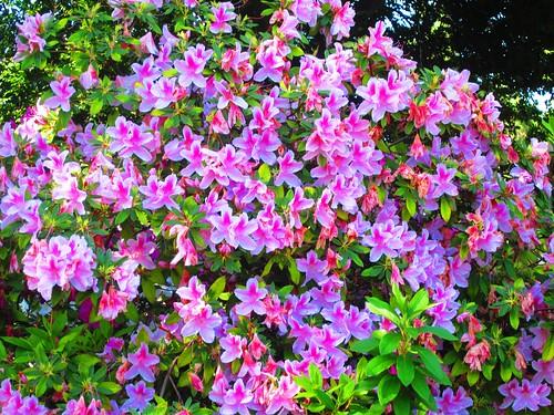 Flores en el Parque Balboa