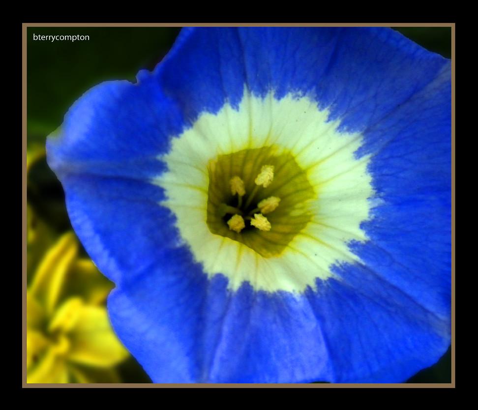 dscn9616 1 72 blue