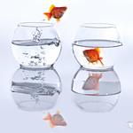 Gold Fish Bowl Jump 089/365 [explore #150]