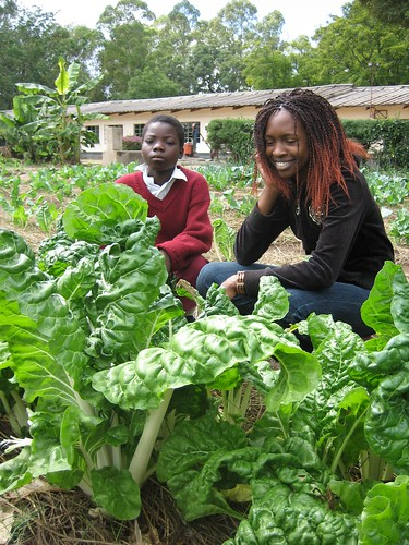 Healthy  spinach in a school garden (urine fertilised)
