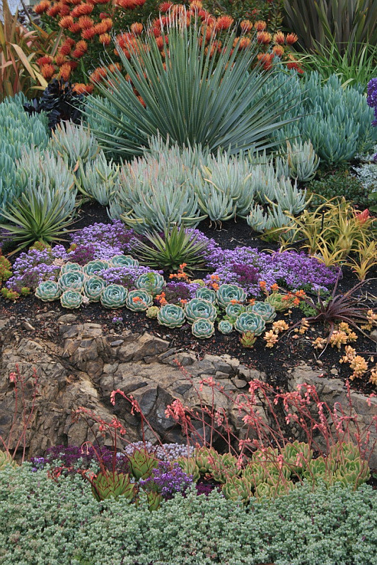rock outcrop with succulents