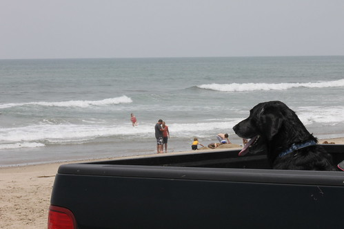 Dog waiting, Emma Wood State Beach