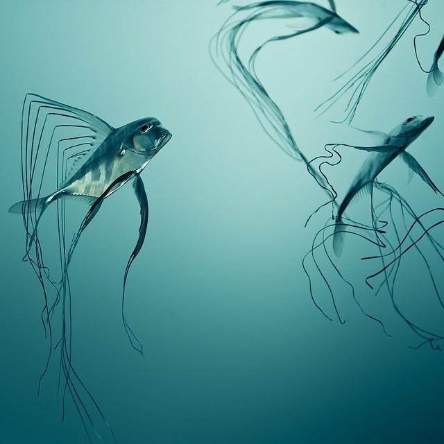 Fish Texture