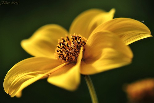 ~~Pour tous ceux qui aiment le jaune~~