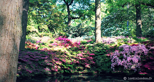 isabella plantation richmond park