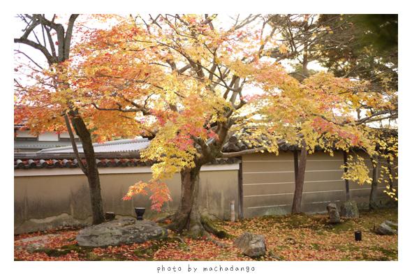 中門旁的楓樹