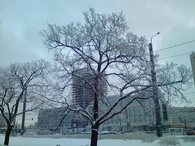 Морозное дерево // Frosty Tree