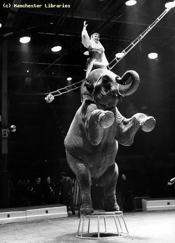 Belle Vue Circus, Elephant and performer