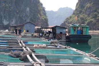Besuch Pangasius Fischzucht 10