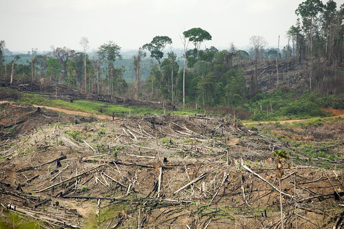 Turning the Page on Rainforest Destruction: Children's Books and the Future of Indonesia's Rainforests