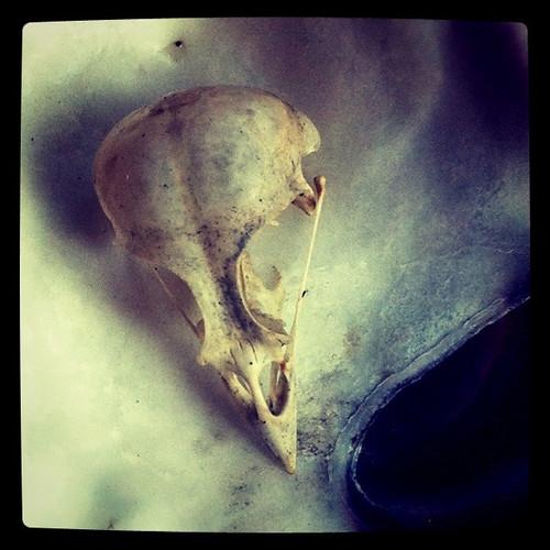 Tiny bird skull on a half shell