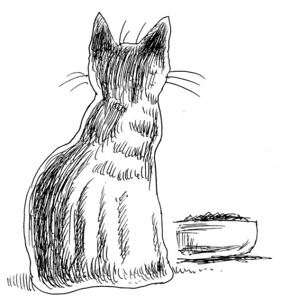 small-cat-and-food-dish