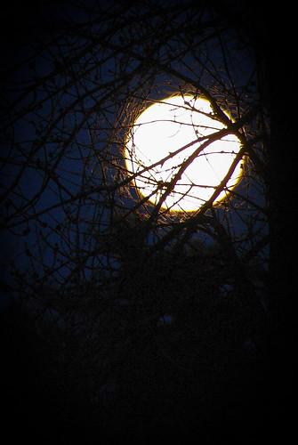Super Moon rising... Entangled