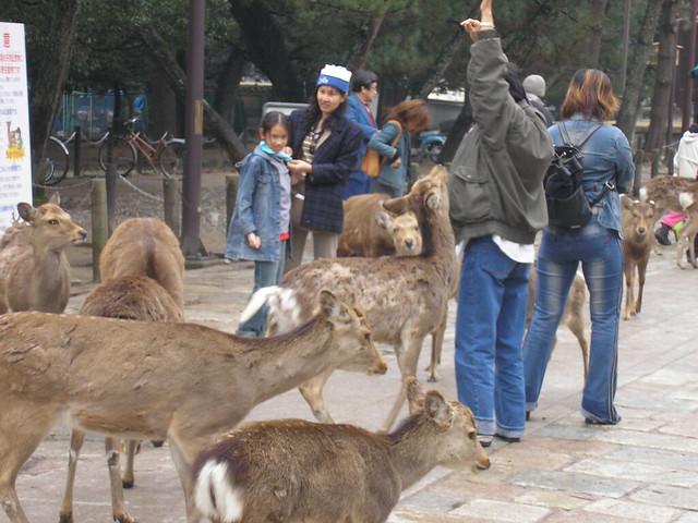 Deer harrassing tourist!
