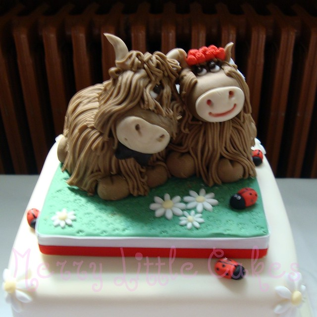 Highland Cows Flickr Photo Sharing