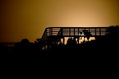 MDG Sepia Rail