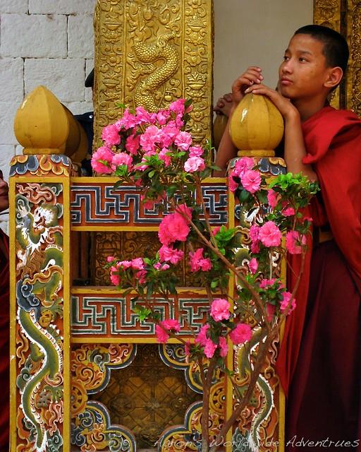 Pensive Monk