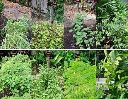 Bangkok - Thiptara garden
