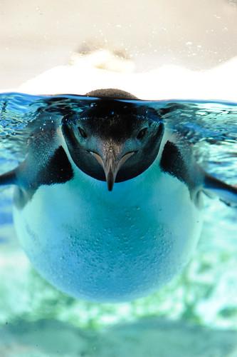 20110115 Nagoya Aquarium 11