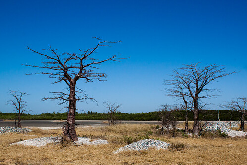Baobabs i sequera by frostis