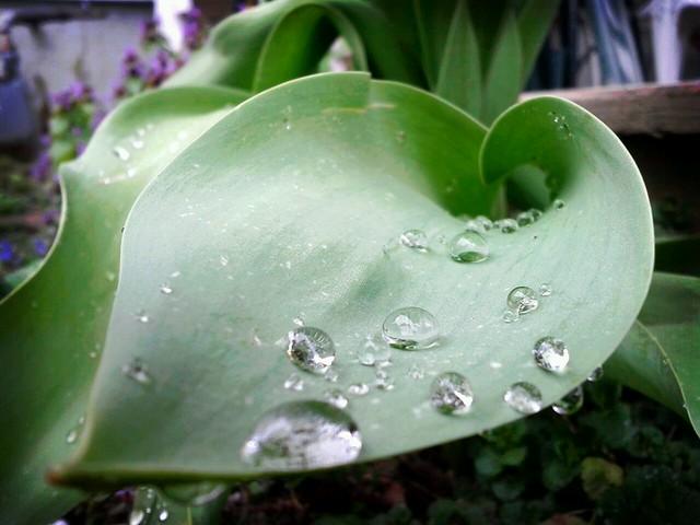 Goteiras de lluvia