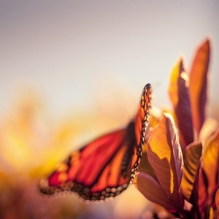 Butterfly / Macro / Nature