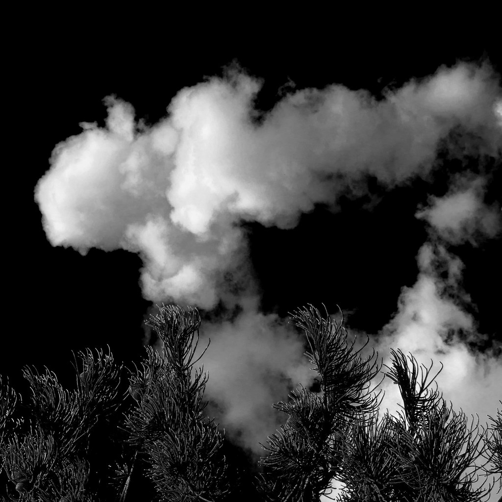 Cumulus/pine black and white