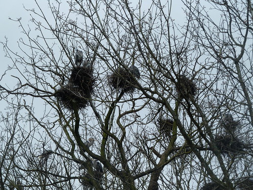 Heronry at Stanley Park by wlcutler, on Flickr