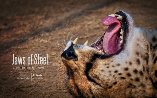 Jaws of Steel - Acceleration in It`s Core by Fotorix Studio
