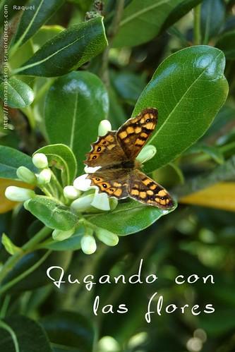 Mariposa. Jugando con las flores