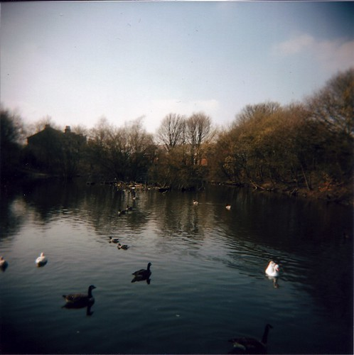 Duck Pond, South View, Carrbrook